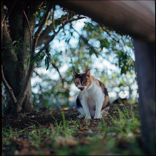 三毛猫もきっと明けましておめでとうございますニャと言ってますよ