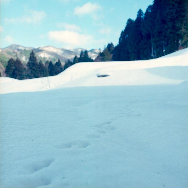 足跡(たぶん野兎)