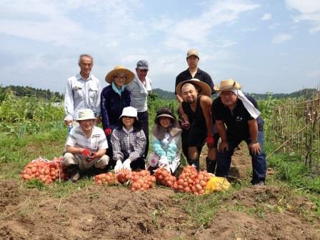 ジャガイモ収穫②