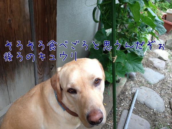 QSbWPeILOOXM_ab1371964061_1371964143.jpg