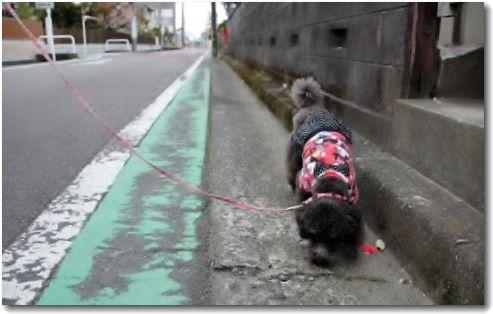 お散歩中♪