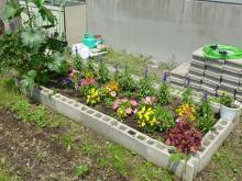 中庭花壇4
