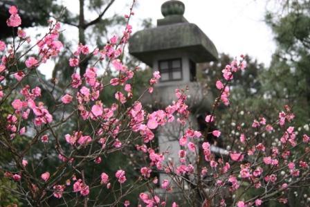 清涼寺の阿弥陀堂前の紅梅_H17.02.19撮影