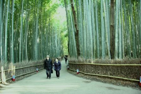 竹林の道_H24.12.08撮影