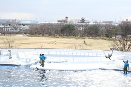 イルカと東寺と新幹線_H24.12.23撮影