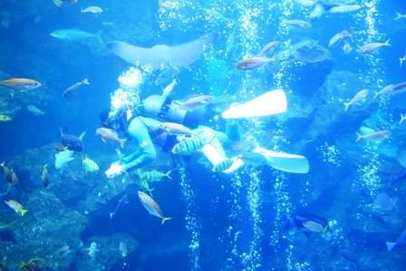 大水槽の魚とダイバー_H24.12.23撮影