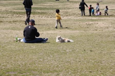 梅小路公園の春_H25.03.16撮影