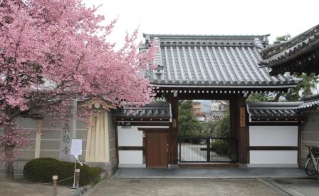 長徳寺のオカメ桜_H25.03.17撮影