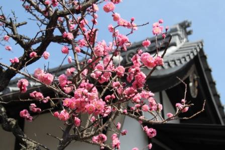 嶋原住吉神社_H25.3.17撮影