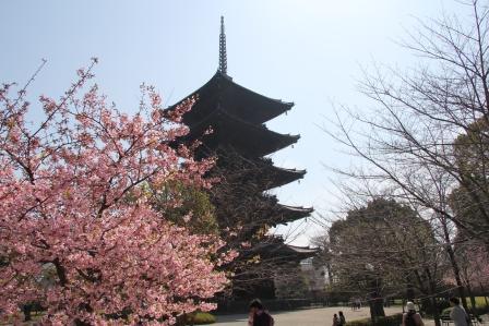 東寺の桜_H25.03.28撮影