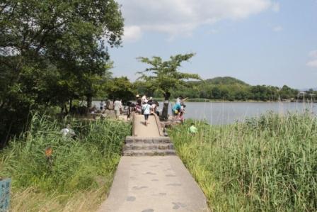 広沢池の初夏_H25.06.16