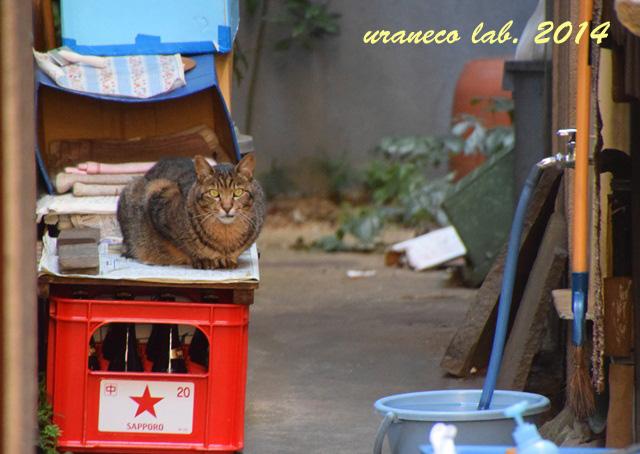 10月28日路地の猫