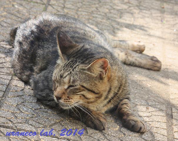 10月29日公園の雉猫