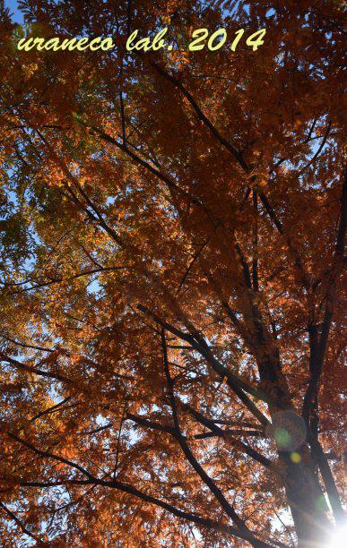 11月25日木漏れ日