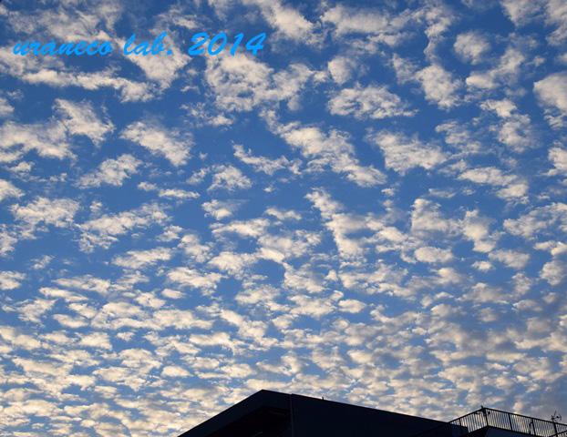 11月27日鰯雲