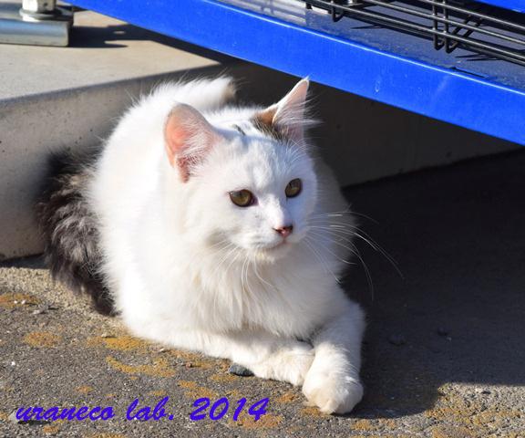 11月26日美人猫