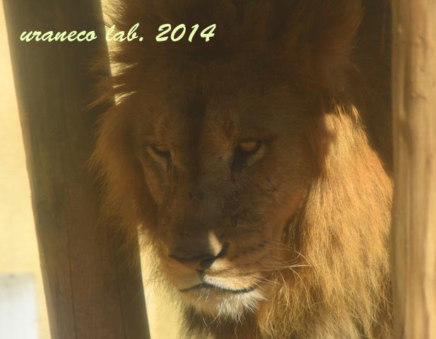 11月27日ライオン