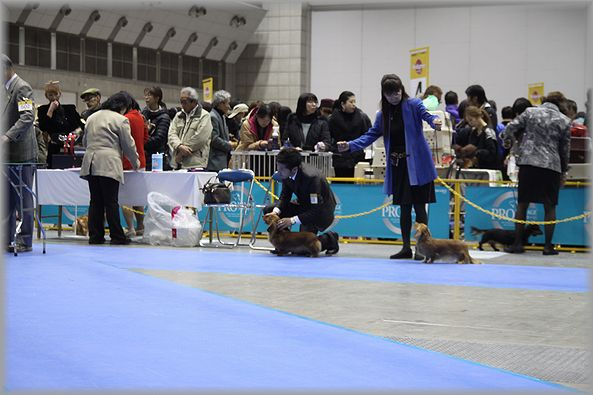 2012.12.23 ルナちゃん