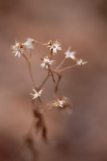 hibiscus20130406-6148.jpg