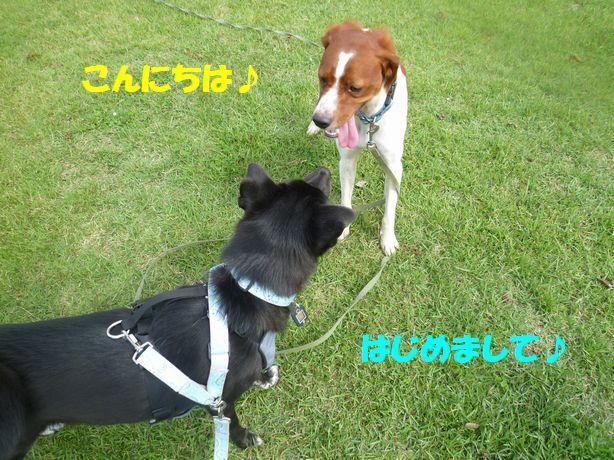 100_20120927190039.jpg
