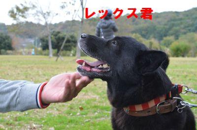 103_20121111153629.jpg