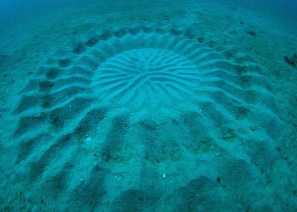 海の底の愛の巣