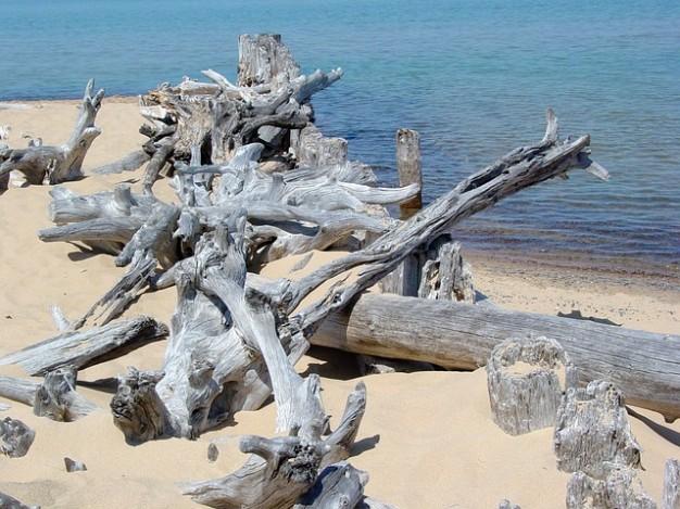 海の枯れ木