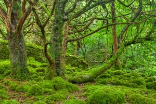 エメラルドの森