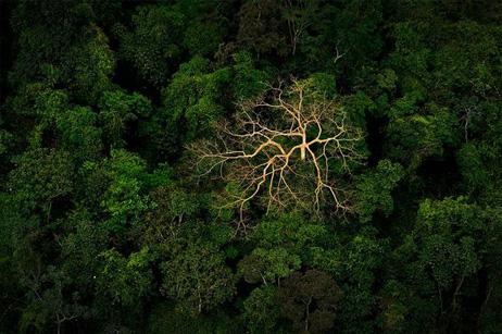 熱帯雨林の枯れ木