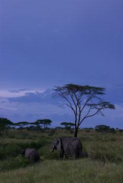 アフリカの青
