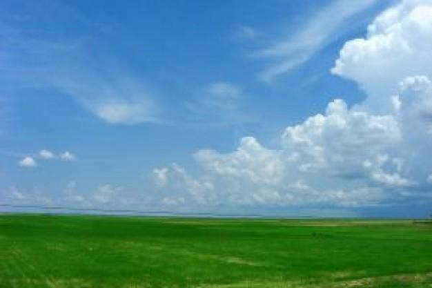 green-wheat-field.jpg