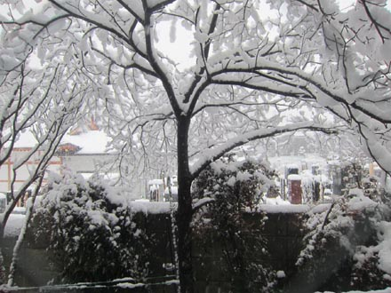 東京の大雪①