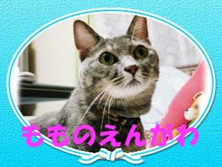 make3854920034291717170engawa.jpg