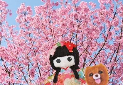 川津桜です2