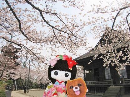 桜いっぱいです