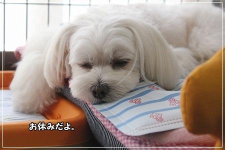 お休みしまーす!!!