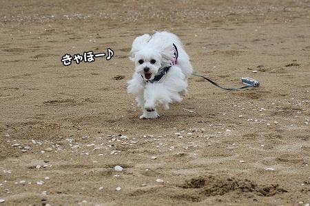 走って~!