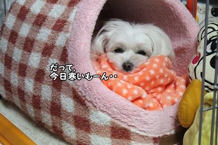 確かに寒いけど^m^;