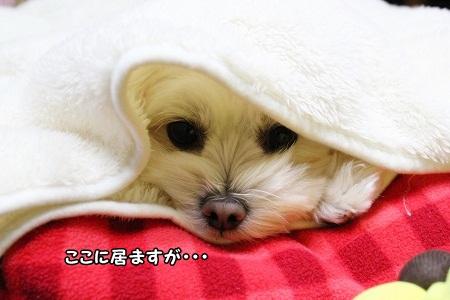 同系色の毛布にIN☆