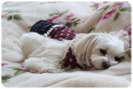 まったりすもも~ん♪ 寝ちゃっていいのにね(^o^)