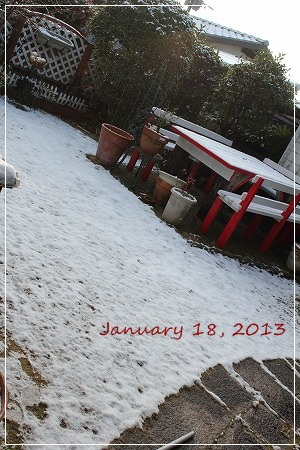 ちょっとだけ積雪。でも積雪はちょっとでも、交通網はオールマヒ・・・・(汗)