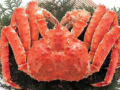 蟹スレの反応