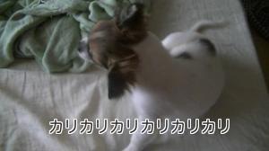 hayate_kaikai2.jpg