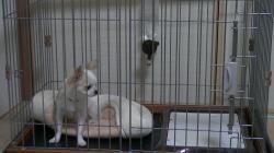 sakura_20120830.jpg