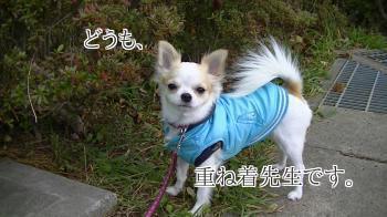 sakura_autumn.jpg