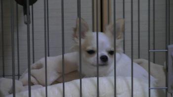 sakura_bed11.jpg