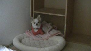 sakura_bedroom3.jpg