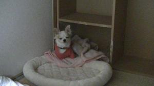 sakura_bedroom4.jpg