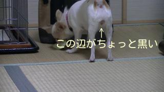 sakura_cyaku.jpg