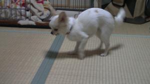 sakura_dancing2.jpg
